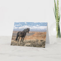 """The Black Stallion"" Note Card"