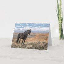 """The Black Stallion"" Note Card"