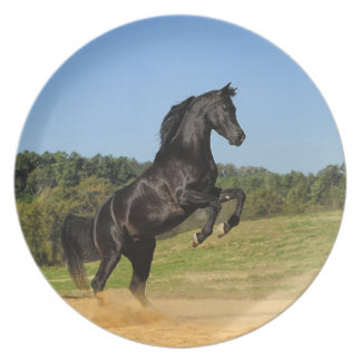 The Black Stallion Party Plate