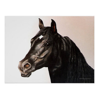 The Black Stallion Posters