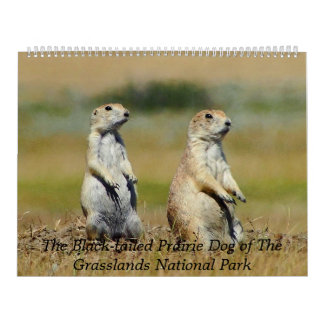 The Black-tailed Prairie Dog 2015 Calendar