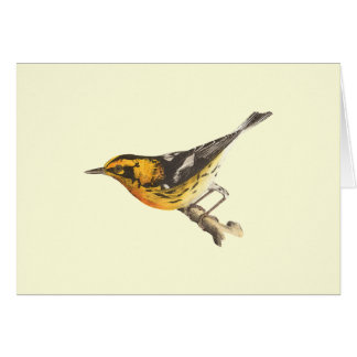 The Blackburnian Warbler(Sylvicola blackburniae) Greeting Card