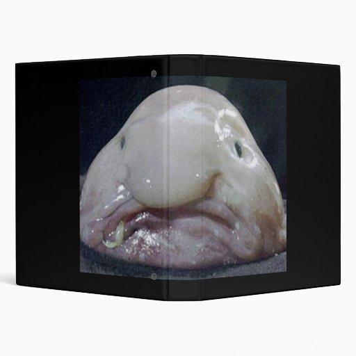 blob fish info - 512×512