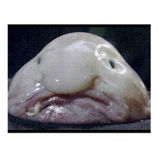 The Blobfish Postcard