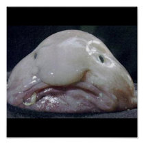 The Blobfish Poster