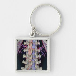 The blood supply of lumbar vertebrae keychain