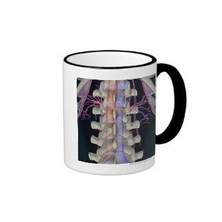 The blood supply of lumbar vertebrae ringer coffee mug