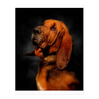 The Bloodhound Postcard
