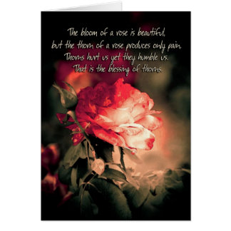 The Bloom of a Rose is Beautiful... Cards