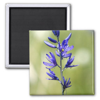 The blossom of a camas lily in Valley County, 2 Inch Square Magnet