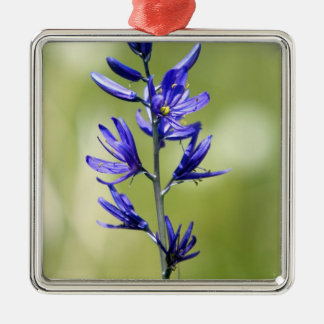 The blossom of a camas lily in Valley County, Metal Ornament