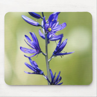 The blossom of a camas lily in Valley County, Mouse Pad