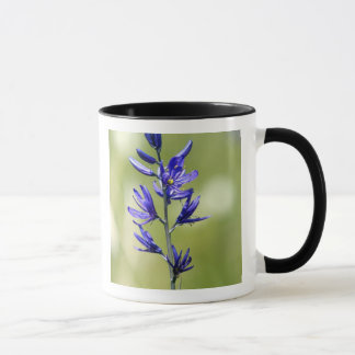The blossom of a camas lily in Valley County, Mug