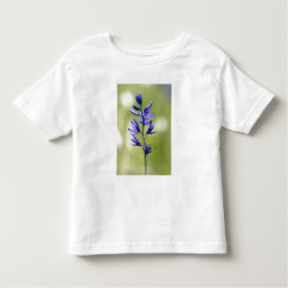 The blossom of a camas lily in Valley County, Shirt