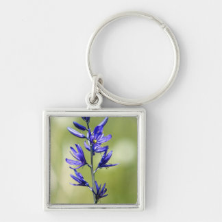 The blossom of a camas lily in Valley County, Silver-Colored Square Keychain