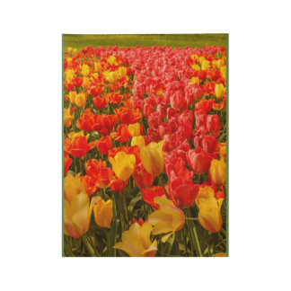 the blossoming of tulips in a park wood poster