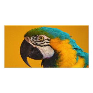 The Blue and Yellow Macaw Ara Ararauna Parrot Bird Card