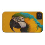 The Blue and Yellow Macaw Ara Ararauna Parrot Bird iPhone 4 Case-Mate Case