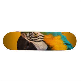 The Blue and Yellow Macaw Ara Ararauna Parrot Bird Skateboard