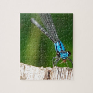 the blue dragon fly jigsaw puzzles