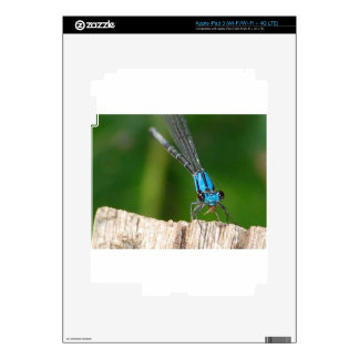 the blue dragon fly skin for iPad 3