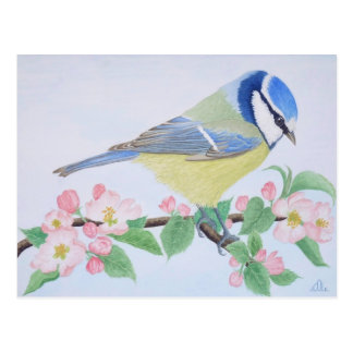 The Blue Tit in spring Post Card