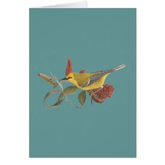 The Blue-winged Warbler(Vermivora solitaria) Card
