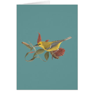 The Blue-winged Warbler(Vermivora solitaria) Greeting Card