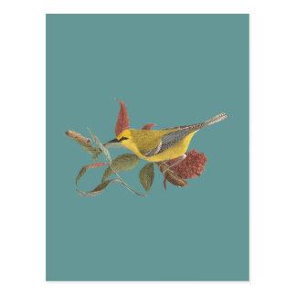 The Blue-winged Warbler(Vermivora solitaria) Postcard