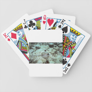 The bluespotted stingray or Kuhl's stingray Bicycle Playing Cards