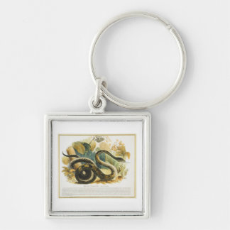 The Boa Constrictor, educational illustration pub. Silver-Colored Square Keychain