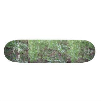 The Bob White Quail. 11 Skateboard