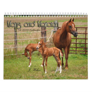 The BOGO Colts- 2019 Calendar- Foal photos Calendar