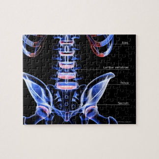 The bones of the lower back jigsaw puzzle