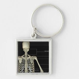 The bones of the upper body keychain