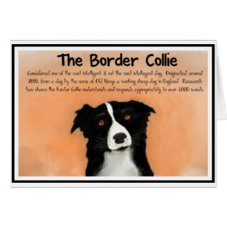 The Border Collie Cards