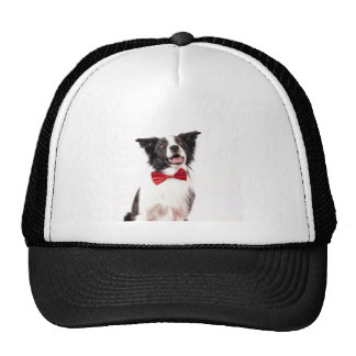 The Border Collie Mesh Hat