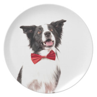 The Border Collie Party Plates