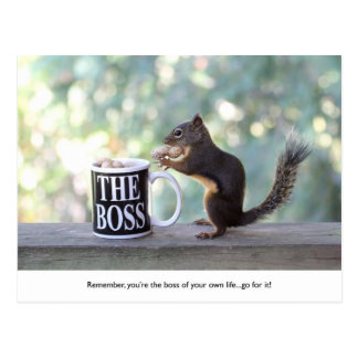 """The Boss"" Squirrel Postcard"