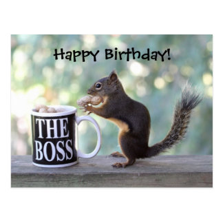 The Boss Squirrel Postcards