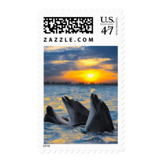 The bottle-nosed dolphins in sunset light postage
