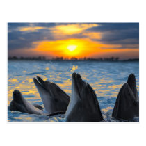 The bottle-nosed dolphins in sunset light postcard