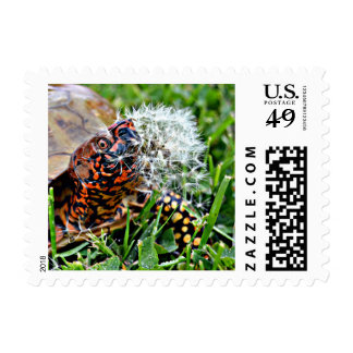 The Box Turtle & The Dandylion Postage
