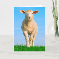 The brave sheep card