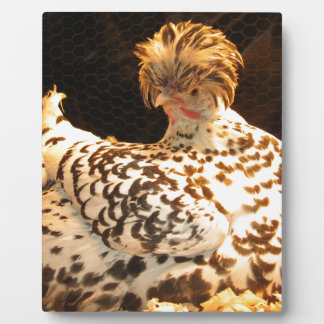 The Broody Hen chicken gifts Plaques
