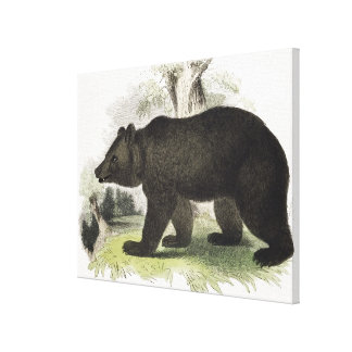 The Brown Bear, educational illustration pub. by t Gallery Wrapped Canvas