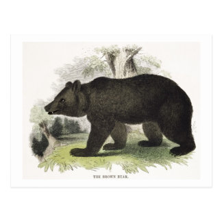 The Brown Bear, educational illustration pub. by t Postcard
