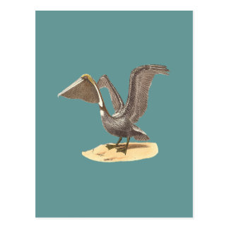 The Brown Pelican	(Pelecanus fuscus) Postcard