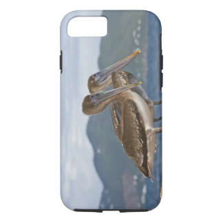 The Brown Pelican ( Pelecanus Occidentalis ) iPhone 7 Case