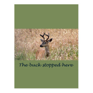 The Buck Stopped Here (2) Post Cards
